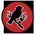 vanbirdfest.com